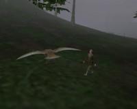 Fly Like a bird 3